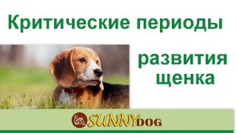 критичкеские периоды развтия щенка. критические точки развития