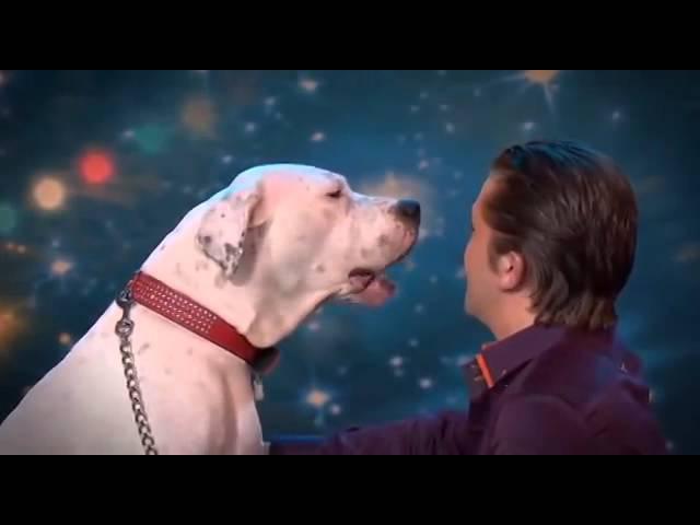 Собака поет песню Уитни Хьюстон AMERICAN TALANT SHOW