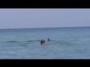 Крым. Дельфины играют на пляже с людьми !
