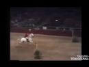Видео клип про лошадей конный спорт