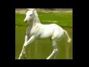 Прекрасная музыка, прекрасные лошади