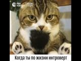 Кот-интроверт