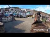 Скейтбордисты научили собаку снимать их трюки