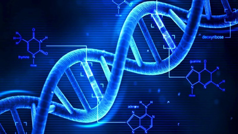 2 Химия клетки Нуклеиновые кислоты ДНК 9 класс биология подготовка к ЕГЭ и ОГЭ 2 bvbz rktnrb yerktbyjdst rbckjns l