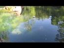 Крым. Алупка. Воронцовский парк и дворец. Июнь 2015 г.