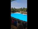 лоро парк дельфины
