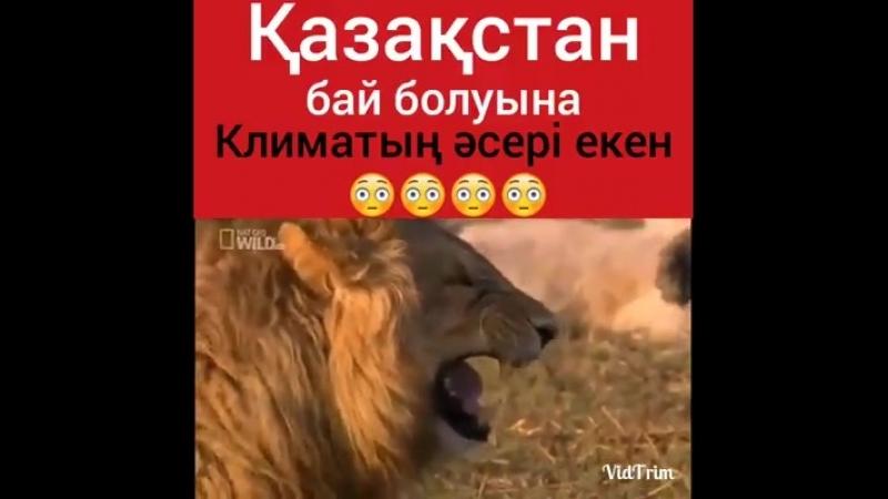 казакстаннын бай болуына климаттын асеры