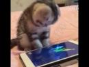 Смешной котёнок