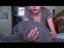 Kitten Nip Slip