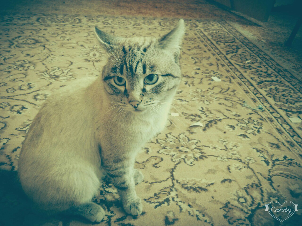 Потерялся кот, кто видел пишите в лс.