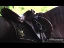 клип про лошадей 2