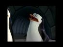 Персонаж из Мурманска в мультсериале Пингвины из Мадагаскара