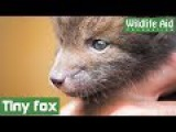 GoPro Cute baby fox saved from garden netting!