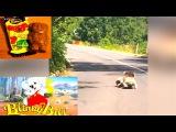 Ozzy Man Reviews Koala Fight