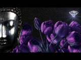 Buddha Zen Bar the Best of Buddha Zen Bar 2018 #Set 2 HD
