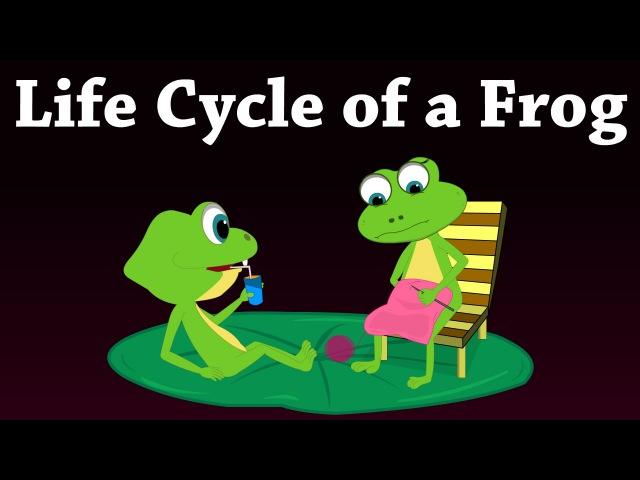 Life Cycle of a Frog | aumsum kids education lifecycle frog