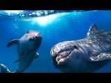 Музыка глубокого сна Морской релакс Music to relieve stress