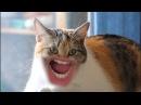 Смешные котята мяукаюточень смешно