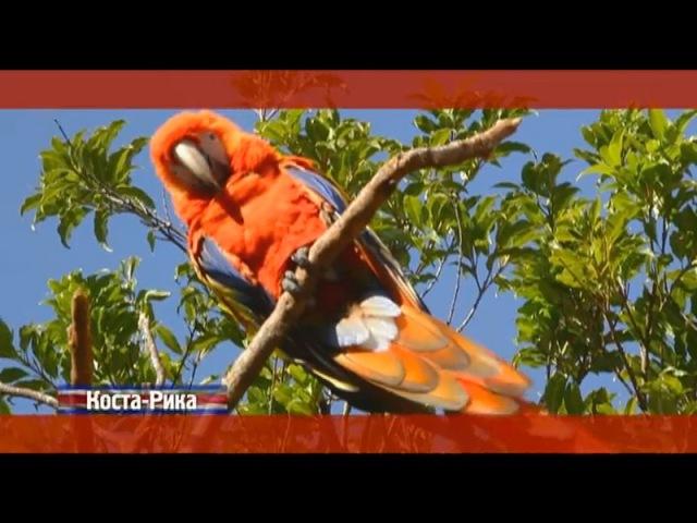 Орел и решка: Коста-Рика