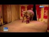 Вести-Москва  •  У Театра зверей имени Дурова появится новая сцена