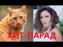 Реакция кота на хит парад клип Ольги Бузовой