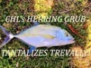 CHL's NEW Herring Grub Tantalizes Bluefin Trevally