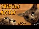 Смешные кошки ДО СЛЁЗ Коты приколы про кошек и котов 2017 Funny Cats Compilation