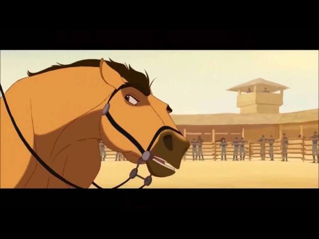 Spirit the stallion of Cimarron Escape