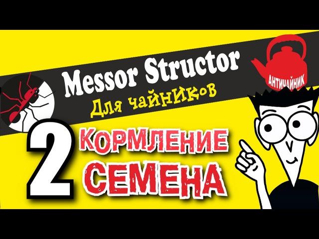 Муравьи для чайников №2. Семена для Messor structor.