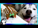 DIY GINGERBREAD DOG HOUSE for Christmas 🎄   DIY Dog Treats   Snow Dogs Snacks 62