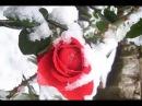 წითელი ვარდები თოვლზე -ლევან კაშმაძე 2017,..