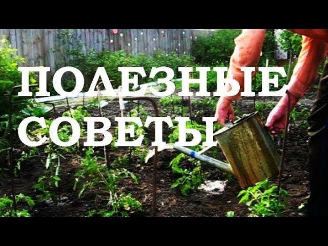 Мир Огорода - Секреты огородника и садовода