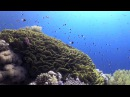 Diving in Sharm el Sheikh, Egypt HD