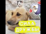 Котёнок стал лучшим другом для собаки!