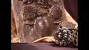 Мастер класс рельефное гипсовое панно