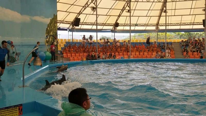 Дельфин-Шоу часть 3(они самые)о.Пхукет,Тайланд апрель 2018 » Freewka.com - Смотреть онлайн в хорощем качестве