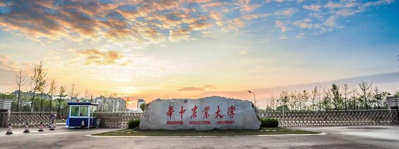Бесплатное обучение в Ухане, Китай