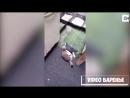 Кошка играет с голубем VIDEO ВАРЕНЬЕ