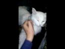 Кошка любит всех ласкать ))