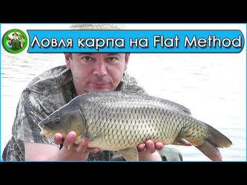 Ловля карпа на флэт метод - Карпфишинг 2018. Рыбалка на Молештах.