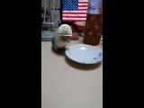 Попугайный флешбэк