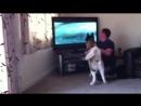Собачка спешит на помощь