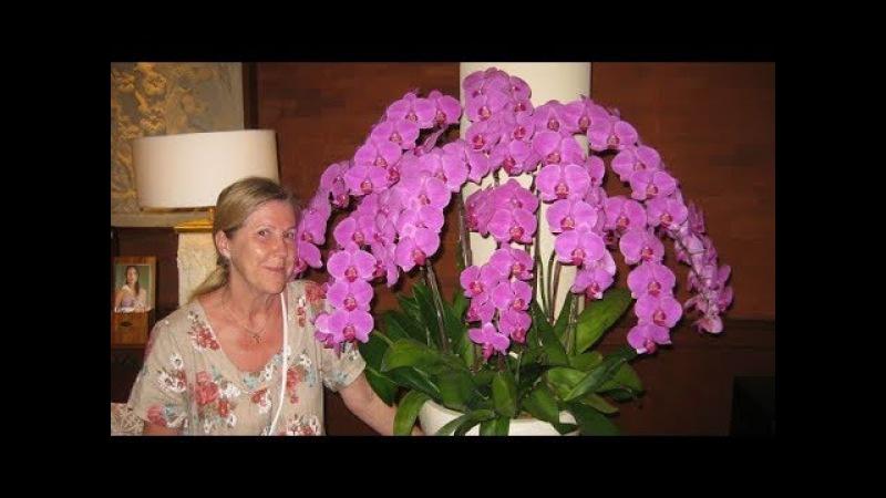 Как добавить цветонос у орхидеи? Искусственные цветоносы с АлиЭкспресс.