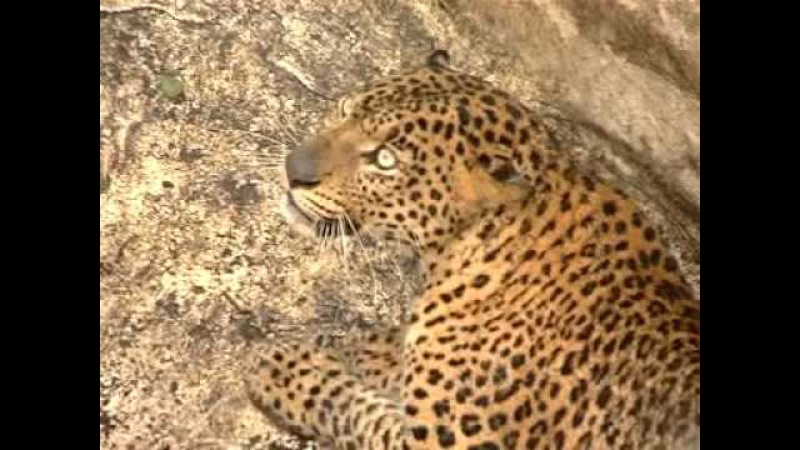 Leopard Recue Ooty, India by www.wnct.in
