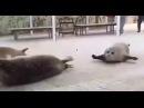 Вторжение тюленей