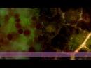 Черная пятнистость на листьяч розы, микроскоп СССР, Ломо, Р-11