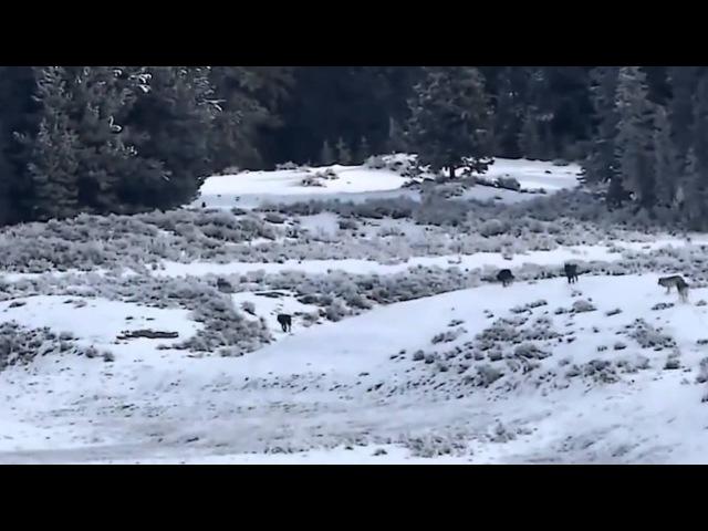 Волк Одиночка музыка и слова Феликс Луцкий New 2015