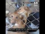 Россию зачистят от бродячих собак перед ЧМ-2018