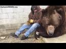 When your bear had a hard day