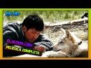 El ultimo lobo de Jean Jacques Annaud Completa Latino